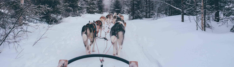 Husky tocht in Zweden door het bos