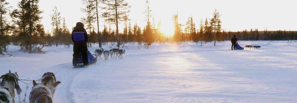 Hondeslee in Noord Zweden
