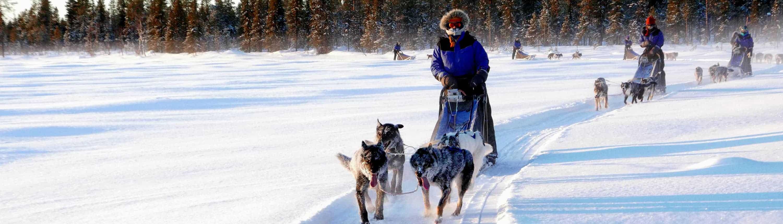 Huskytocht in Lapland, Zweden