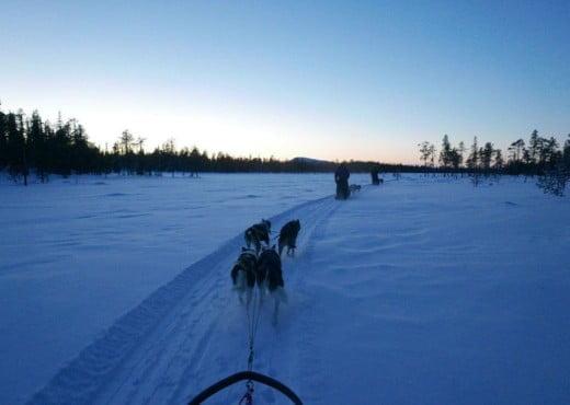 Arjen Treurniet met huskies in Zweden
