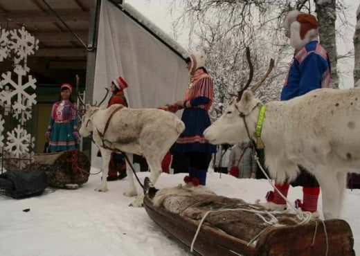 Rendieren bij de markt in Jokkmokk
