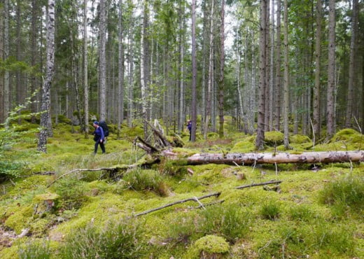 Kano Wandel Trekking Zuid Zweden 2020 09 021 Herfst Kano & Wandel trekking in Zuid Zweden