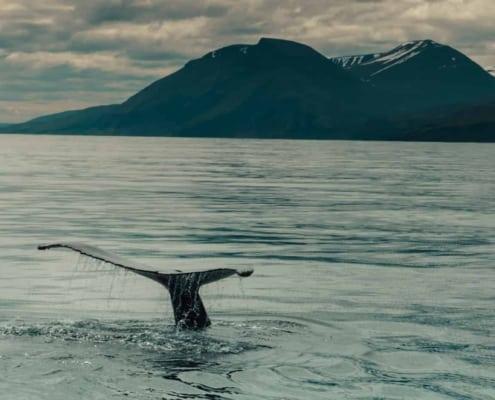 Arctic Adventure IJsland 022 FORCE OF NATURE TREKKING